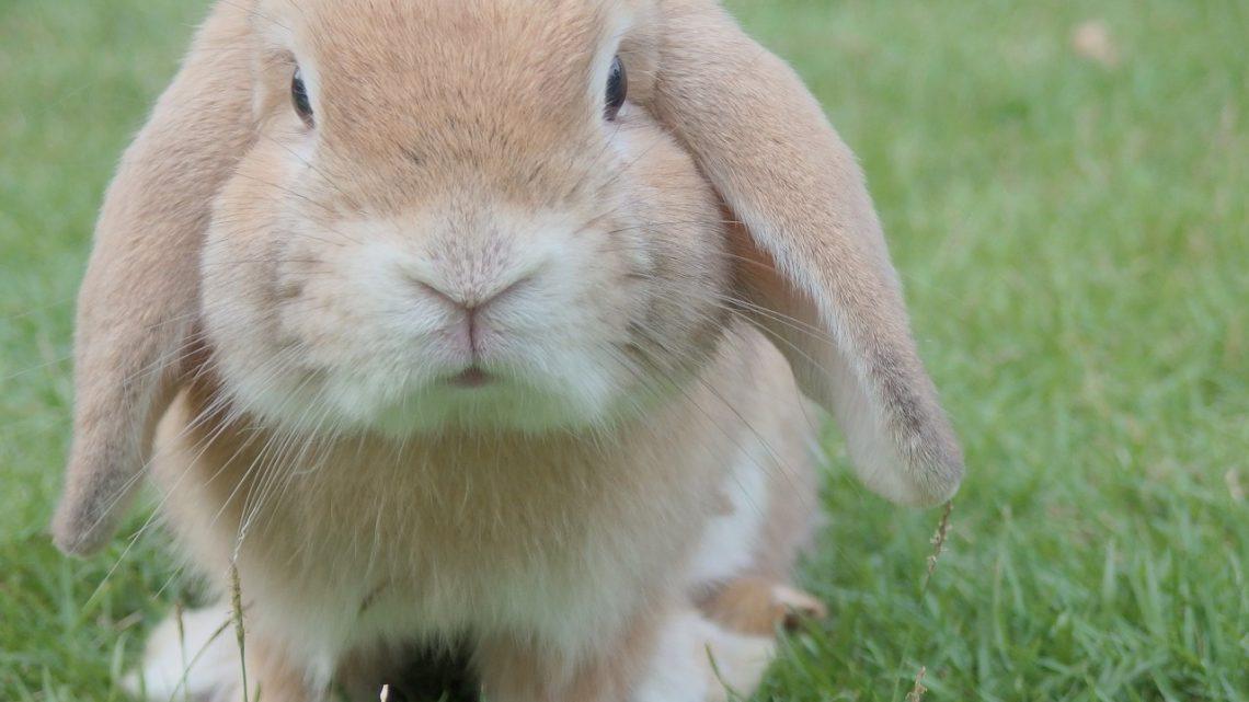 Modern konijnenhok bouwen